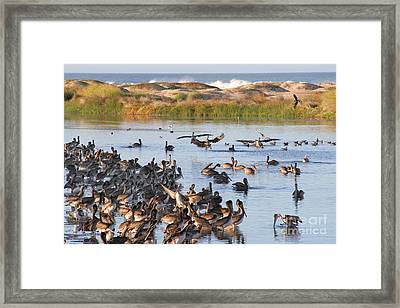 Framed Print featuring the photograph Pelican Party by Bob and Jan Shriner