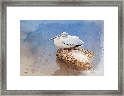 Pelican Peace Framed Print by Betty LaRue