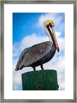 Pelican Perfect Framed Print