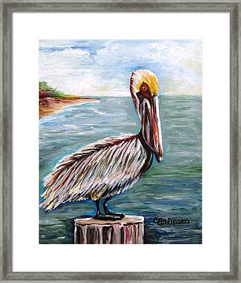 Pelican Pointe Framed Print