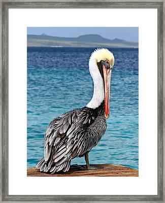 Pelican Portrait Framed Print by Jean Noren