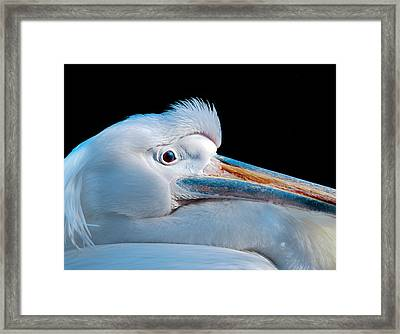 Pelican Portrait Framed Print