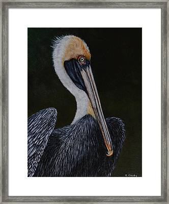 Pelican Posing Framed Print