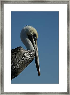 Pelican Profile 2 Framed Print by Ernie Echols