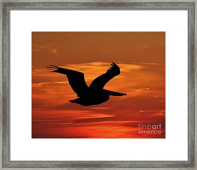 Pelican Profile Framed Print