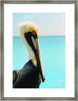 Pelican Profile And Water Framed Print