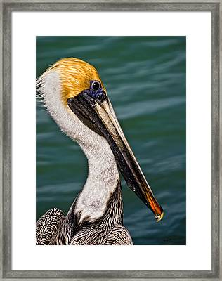 Pelican Profile No.40 Framed Print by Mark Myhaver