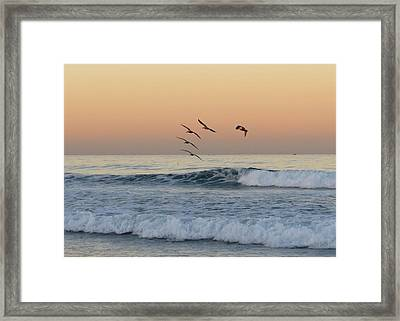 Pelican Series 2 Framed Print