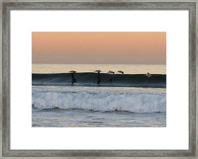 Pelican Series 3 Framed Print