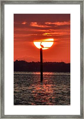 Pelican Silhouette Sunrise On Sound Framed Print by Jeff at JSJ Photography