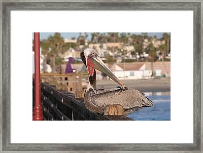 Pelican Sitting On Pier  Framed Print
