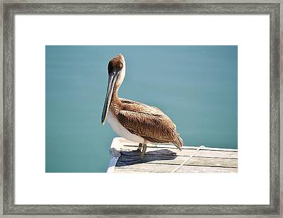 Pelican - Sitting On The Dock Of The Bay Framed Print by Paulette Thomas