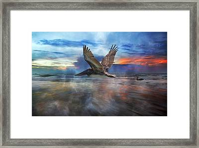 Pelican Sunrise Framed Print by Betsy Knapp
