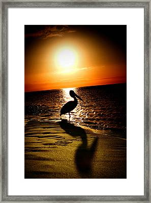 Pelican Sunrise Framed Print by Yew Kwang