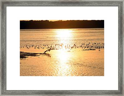 Pelican Sunset Framed Print by Mark Russell