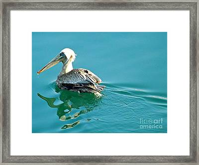 Framed Print featuring the photograph Pelican Swimming by Clare Bevan