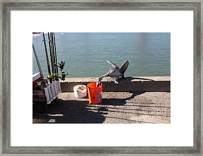 Pelican Thief At San Francisco Torpedo Wharf Fishing Pier 5d21667 Framed Print by Wingsdomain Art and Photography