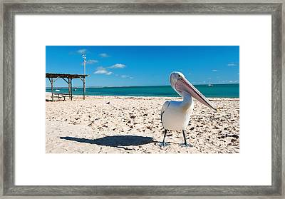 Pelican Under Blue Sky Framed Print