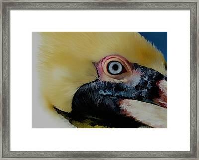 Pelican Up Close Framed Print by Pamela Blizzard