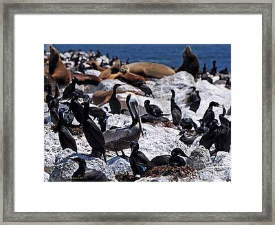 Framed Print featuring the photograph Pelican Visitor by Susan Wiedmann