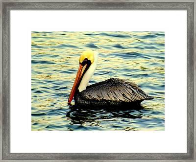 Pelican Waters Framed Print by Karen Wiles