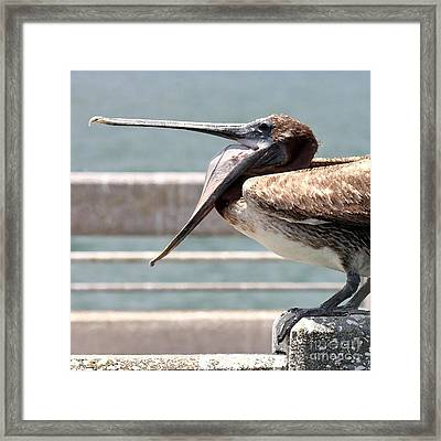 Pelican Yawn - Digital Painting Framed Print by Carol Groenen