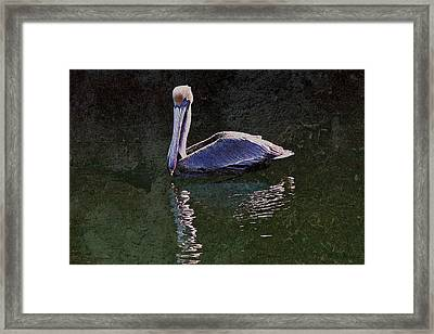 Pelican Zen Framed Print by Suzanne Stout