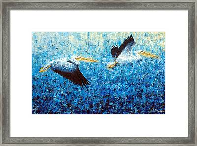 Pelicans 2 Framed Print by Ned Shuchter