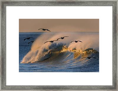 Pelicans And Wave 73a2308-2 Framed Print