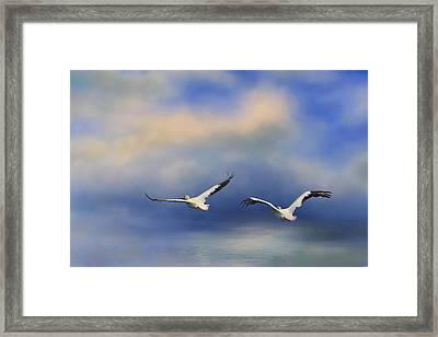 Pelicans At Sea Framed Print