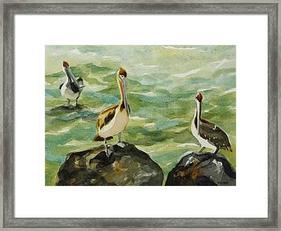 Pelicans By Julianne Felton 9-30-13 Framed Print by Julianne Felton