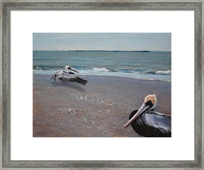 Pelicans Framed Print by Christopher Reid
