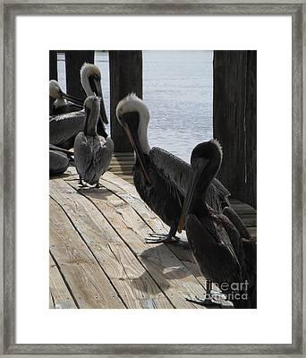 Pelicans Dockside Framed Print