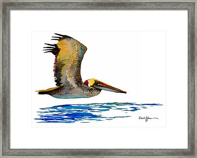 Da137 Pelican Over Water By Daniel Adams Framed Print