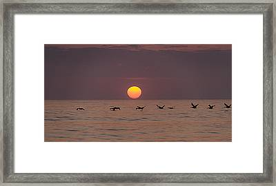 Pelicans In A Row Framed Print by  Island Sunrise and Sunsets Pieter Jordaan
