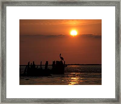 Pelicans In Silhouette In Texas Framed Print by Ray Devlin