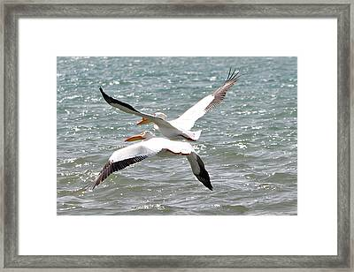 Pelicans In Sync Framed Print