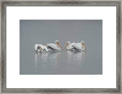 Pelicans In The Mist Framed Print