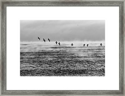 Pelicans In The Mist Framed Print by Lynda Dawson-Youngclaus