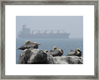 Framed Print featuring the photograph Pelicans In The Mist by Ramona Johnston