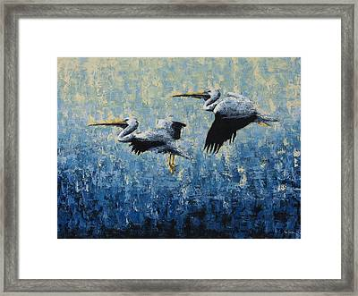 Pelicans Framed Print by Ned Shuchter