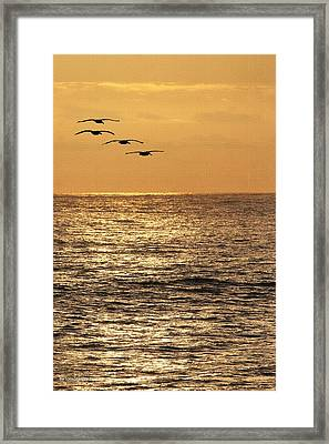 Framed Print featuring the photograph Pelicans Ocean And Sunsetting by Tom Janca