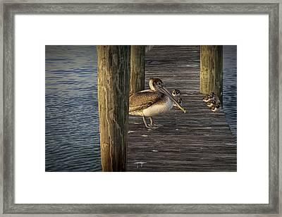 Pelicans On A Dock On Key Islamorada Framed Print by Randall Nyhof