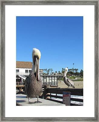 Pelicans On Pier Framed Print