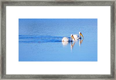 Framed Print featuring the photograph Pelicans On The Bay by AJ  Schibig