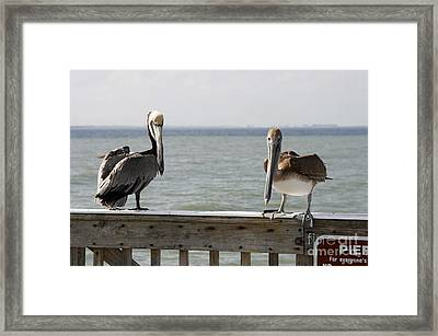 Pelicans On The Pier At Fort Myers Beach In Florida Framed Print by William Kuta