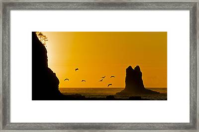 Pelicans On The Wing II Framed Print