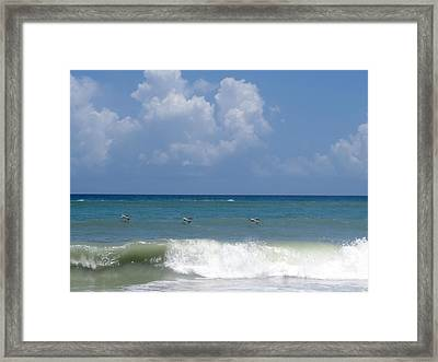 Pelicans Over The Ocean Framed Print by Zina Stromberg