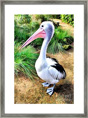 Pelicans Pride Framed Print by Shannon Rogers