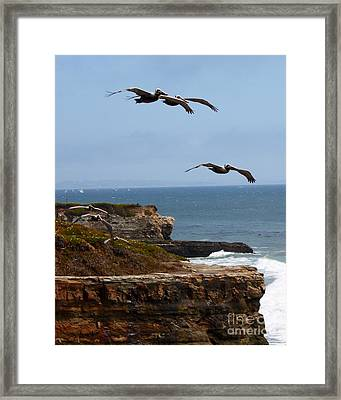 Framed Print featuring the photograph Pelicans by Theresa Ramos-DuVon